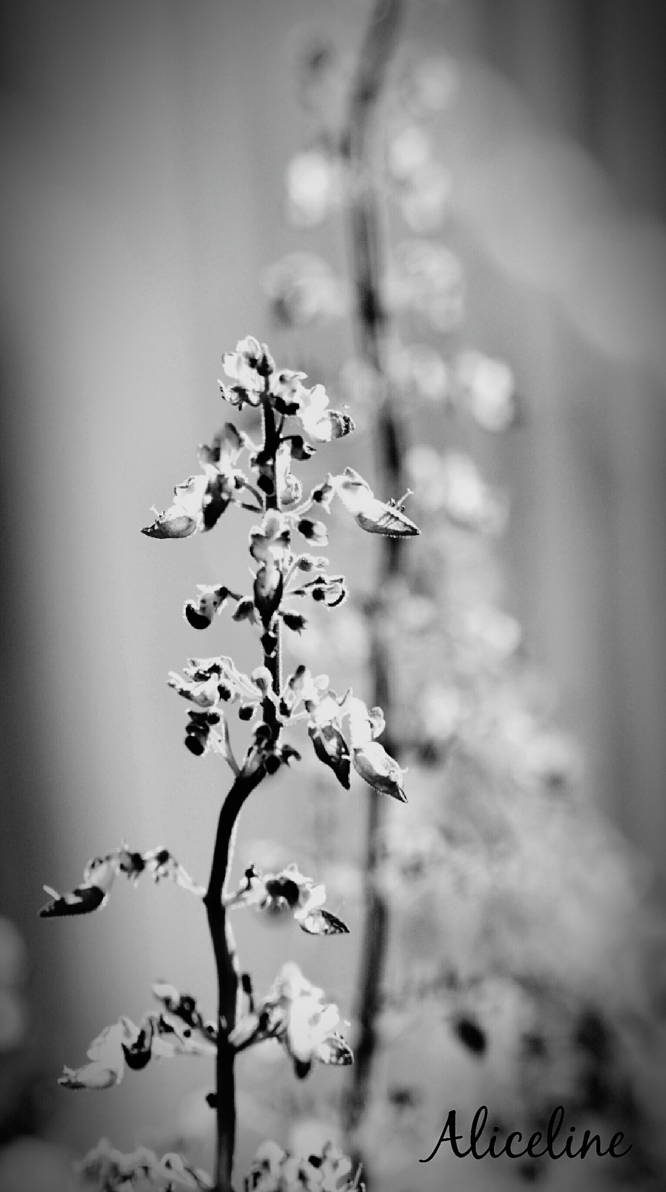 growth, no people, beauty in nature, nature, day, focus on foreground, close-up, fragility, plant, freshness, flower, outdoors, tree, flower head