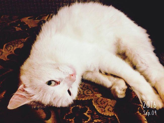 Cat Animal First Eyeem Photo