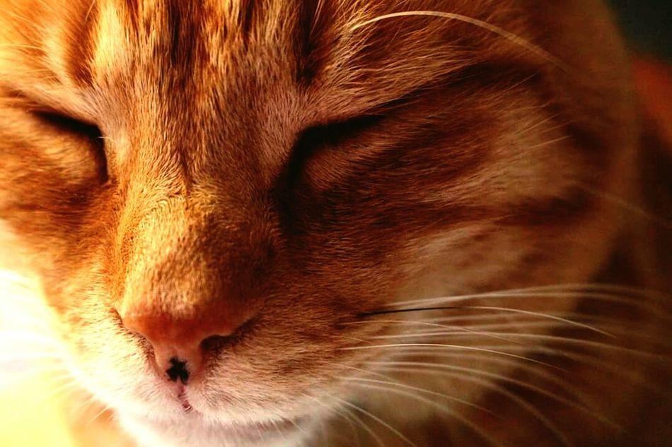 Catsofinstagram Cat Sleeping Cat Cats Of EyeEm Pet Pets Pets Corner Cat Lovers Meow! Animal Sleepy Sleep Canonphotography Canon700D Canon700dgallery Canon700dphotography Canon Animal Photography Catsoneyeem