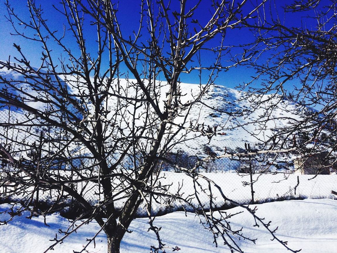 Byme Everithing Love Trees Blue Sky Snow ❄