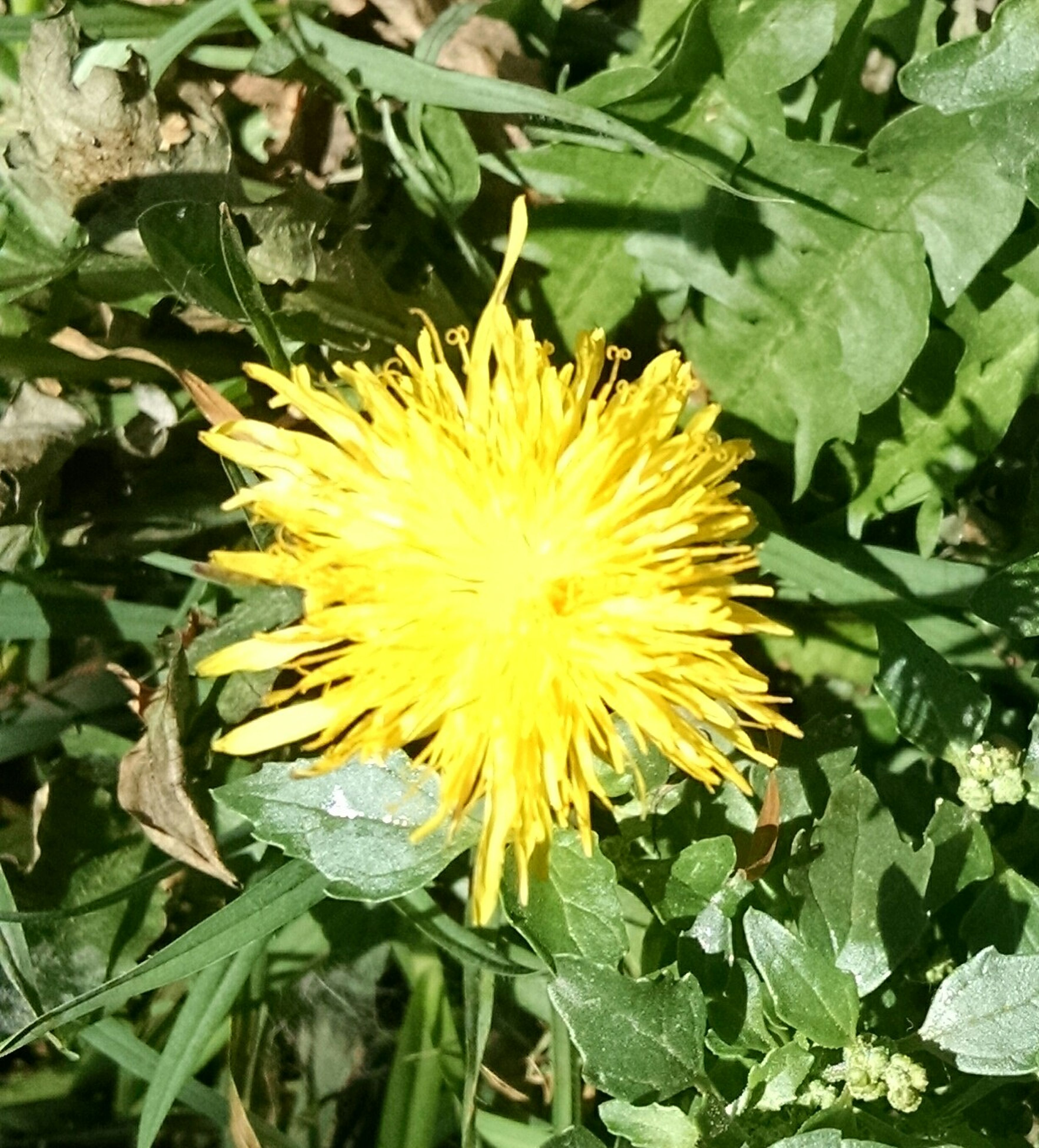 flower, freshness, fragility, flower head, petal, growth, single flower, leaf, beauty in nature, plant, yellow, blooming, nature, green color, high angle view, close-up, pollen, in bloom, day, outdoors
