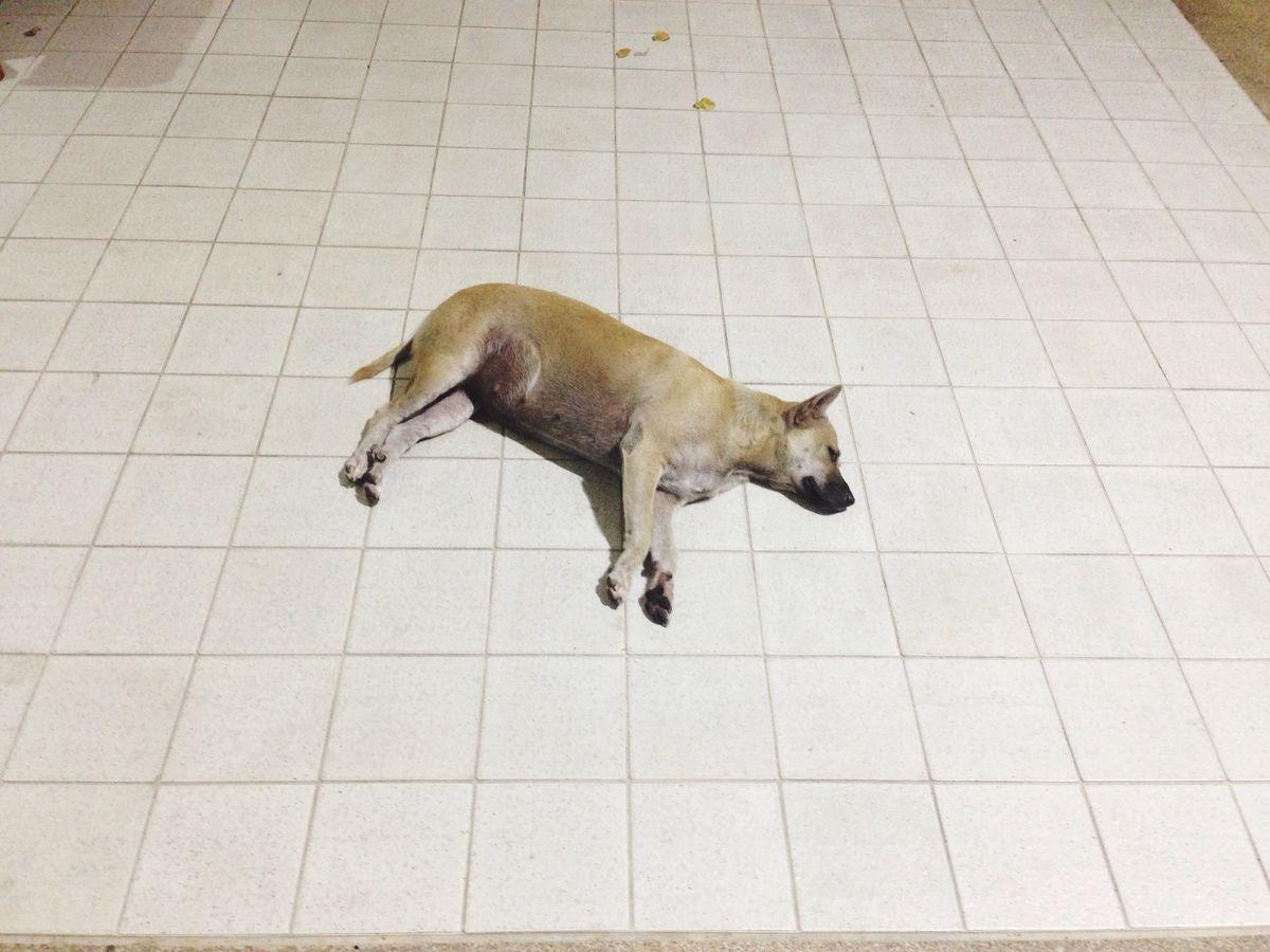 Dog homelessness Dog Dog Homelessness Alone :( Sleeping Floor Nostalgia