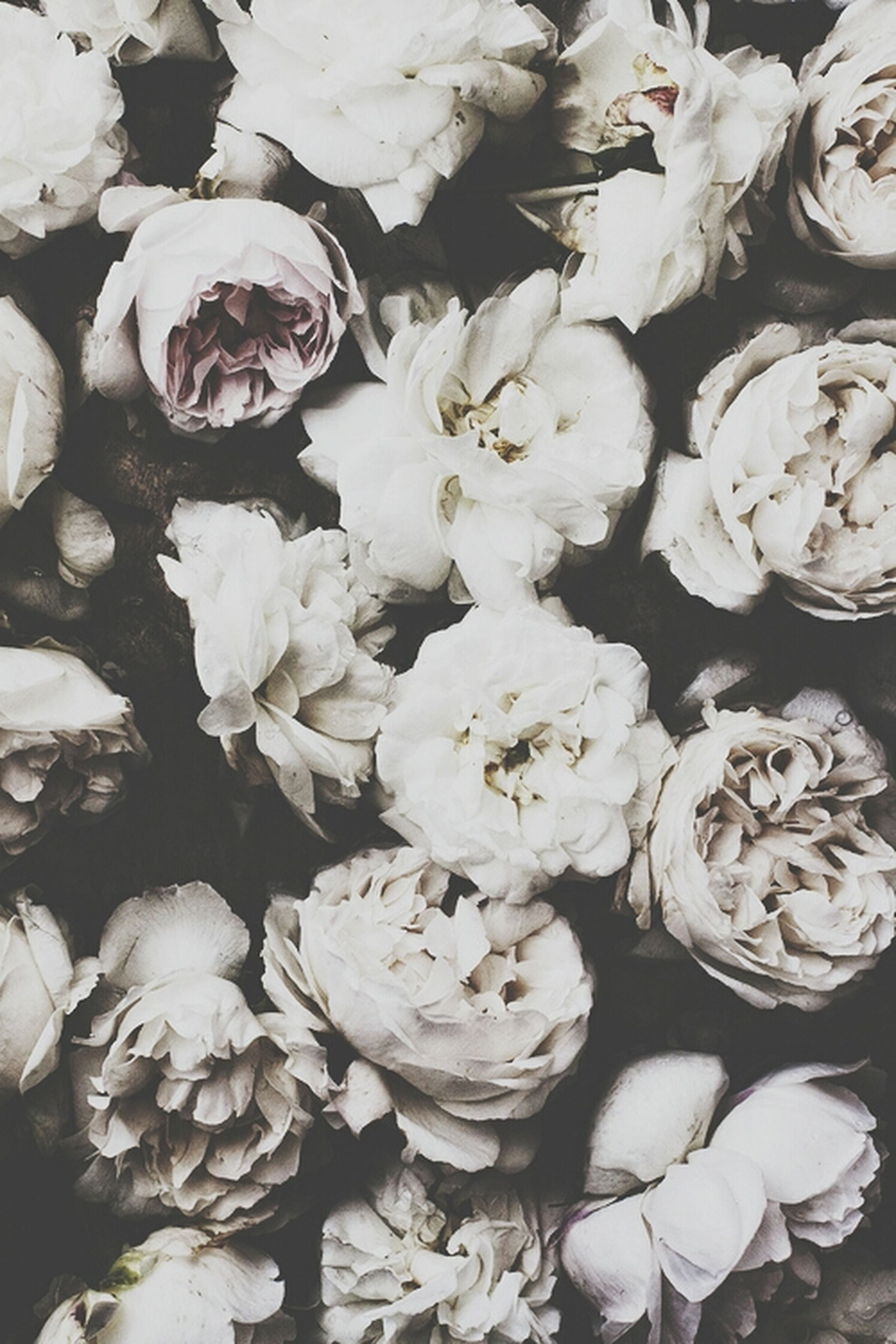 abundance, full frame, flower, white color, freshness, fragility, backgrounds, nature, high angle view, large group of objects, beauty in nature, petal, no people, white, variation, outdoors, day, close-up, flower head, growth