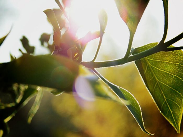 Perfect Imperfection Overlighting Leaf Sun Goes Down Sunny Day Evening Light Sungoesdown Evening Spring Springtime Garden Sunnyday Naturelovers Nature Photography Nature Green Nature Green Color Green Leaves Green Plant Spring Has Arrived Tree Garden Photography Trees And Nature Spring Awakening