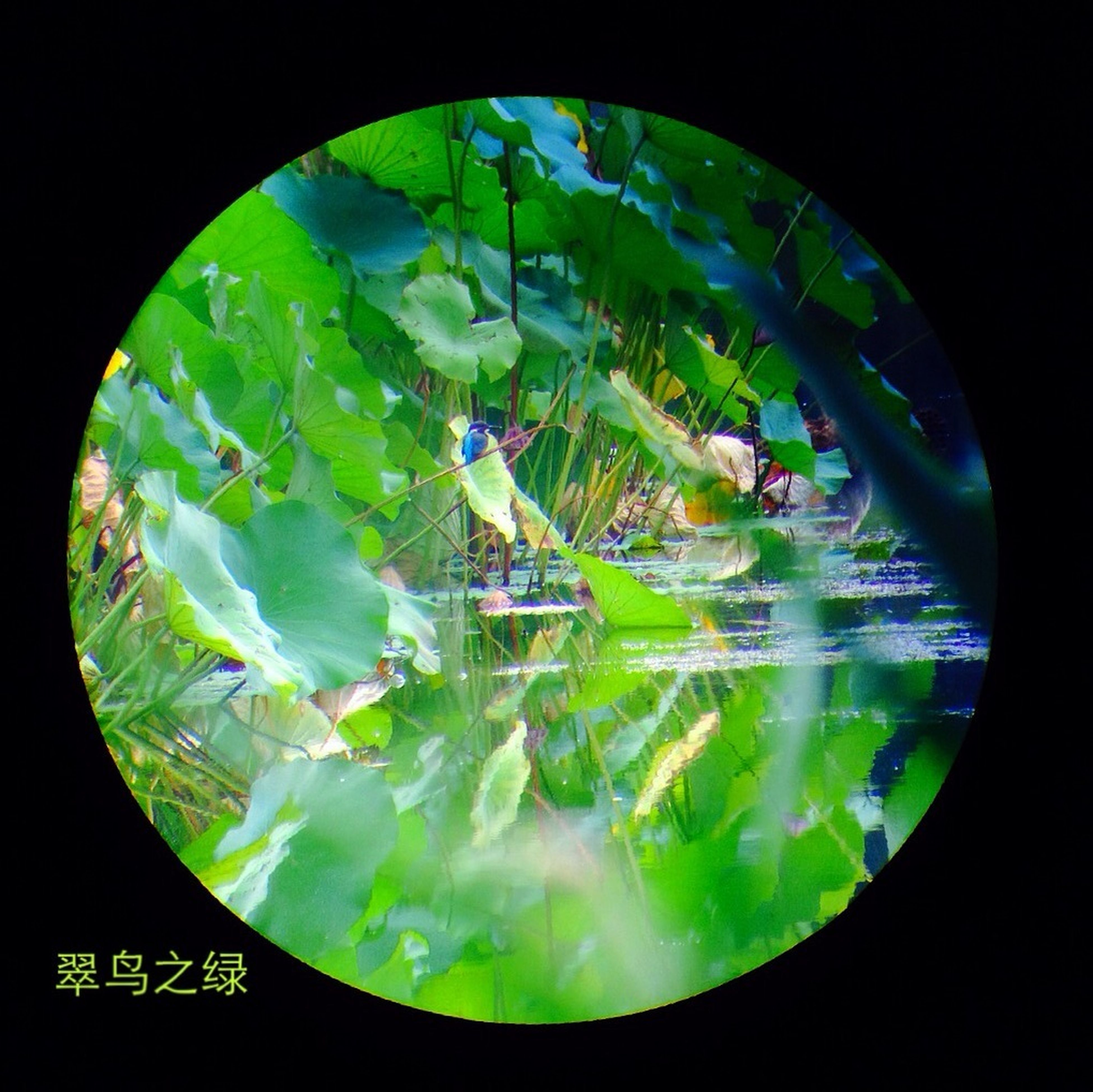 green color, circle, water, indoors, reflection, transparent, glass - material, nature, close-up, geometric shape, no people, night, beauty in nature, leaf, auto post production filter, high angle view, pond, fish-eye lens, sphere, tree