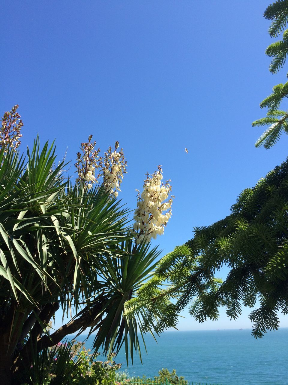 Low Angle View Of Trees By Sea Against Clear Sky
