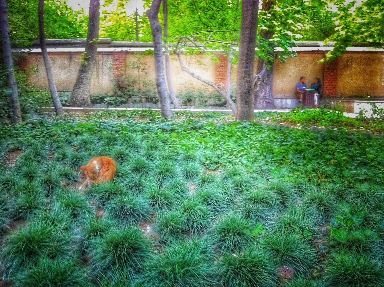 grass, growth, tree, animal themes, green color, nature, field, day, no people, outdoors, plant, beauty in nature, mammal, domestic animals, bird