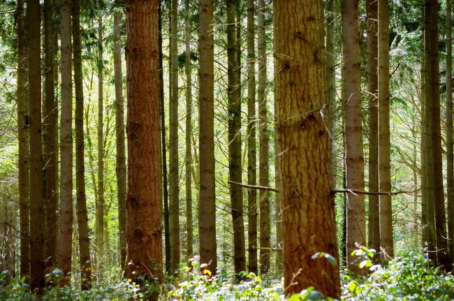 Code Barre Bar Code Forest Forest Photography Ecology Consumerism Nature Nature_collection Pattern