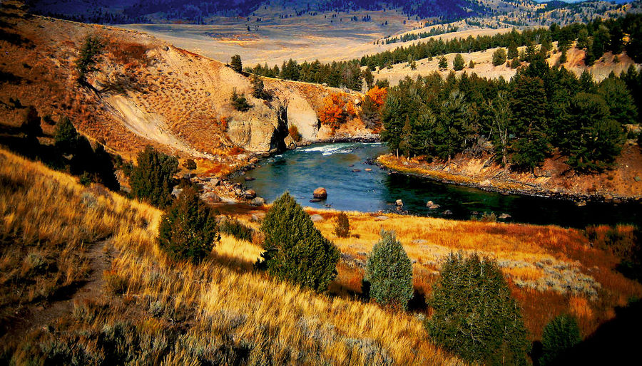 Autumn Beauty In Nature Landscape Nature Outdoors Tranquil Scene Trees Panorama Beauty Snow Colours Winter Yellowstone Fall Colours Wyoming River Sane Mountain Scenic