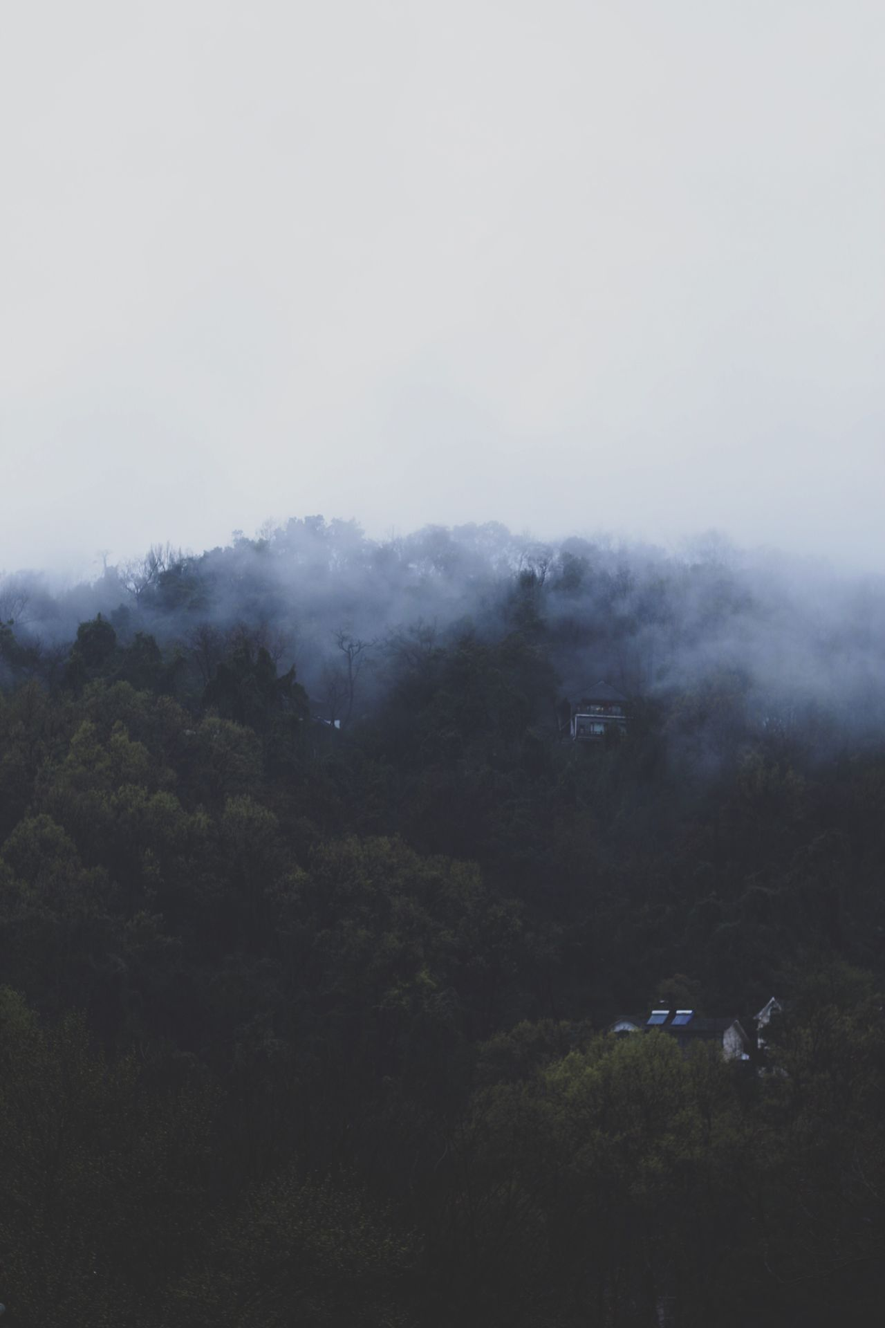 Fog Foggy Foggy Morning Foggy Day Fog_collection Foggy Landscape Hill Nature Tree Scenics Beauty In Nature Landscape Tranquil Scene Tranquility Outdoors No People Mountain Sky Day Hillstation Hills, Mountains, Sky, Clouds, Sun, River, Limpid, Blue, Earth EyeEmNewHere EyeEm Gallery From My Point Of View Beautiful Nature