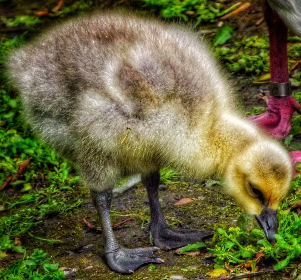 animal themes, one animal, animals in the wild, animal wildlife, no people, day, outdoors, young animal, grass, full length, standing, nature, mammal, close-up, bird