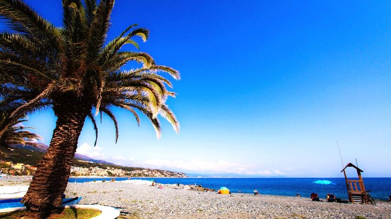 Beach Sea Blue Water Tree Clear Sky Sand Nature Beauty In Nature Outdoors Palm Tree Scenics Tranquil Scene Day Horizon Over Water Sky Tranquility Real People Vacations Italia Landscape Cogoleto