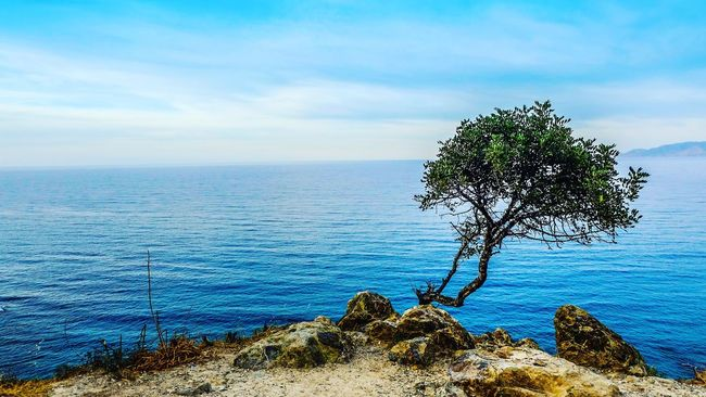 Lonely tree akamas Cyprus Akamas Tree Sea And Sky Romantic Love Sky Amazing View Breathtaking View First Eyeem Photo