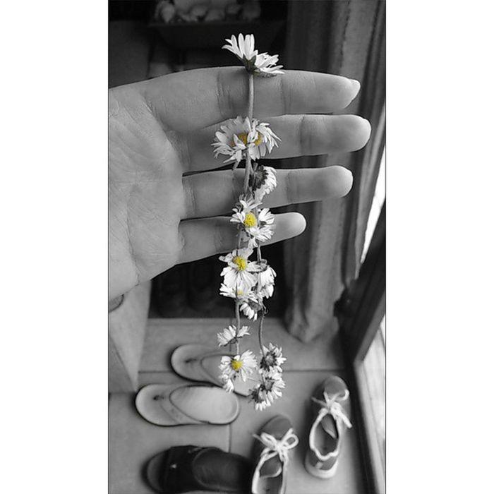 ? ? ? Daisy Chain ? ? ? Credits: Prina and Rihanna🌿