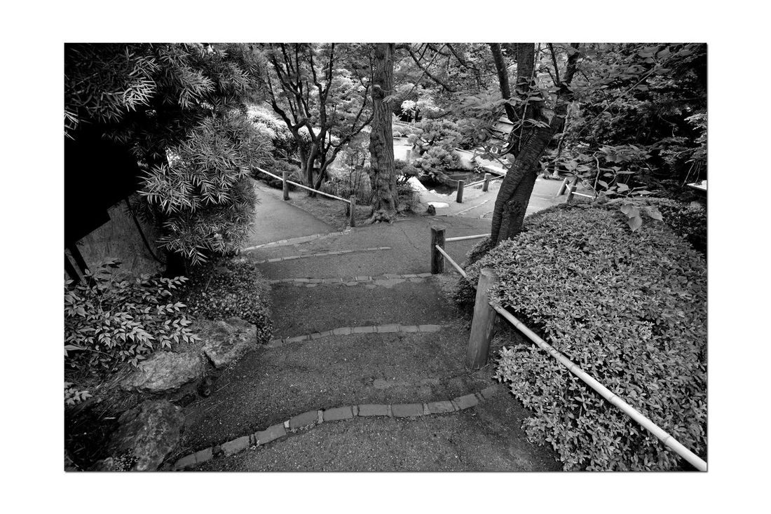 Japanese Tea Garden _ Monochromatic 5 Golden Gate Park San Francisco, Ca. The Oldest Public Japanese Tea Garden In U.S. Built In 1894 For World's Fair 5 Acres Makoto Hagiwara : Caretaker 1895-1925 Garden Garden_lovers Garden_collection Garden Photography Landscape Monochrome Landscape_Collection Landscape_photography Black & White Black And White Photography Blackandwhite Black And White Collection  Path Through The Garden Best Of Stairways