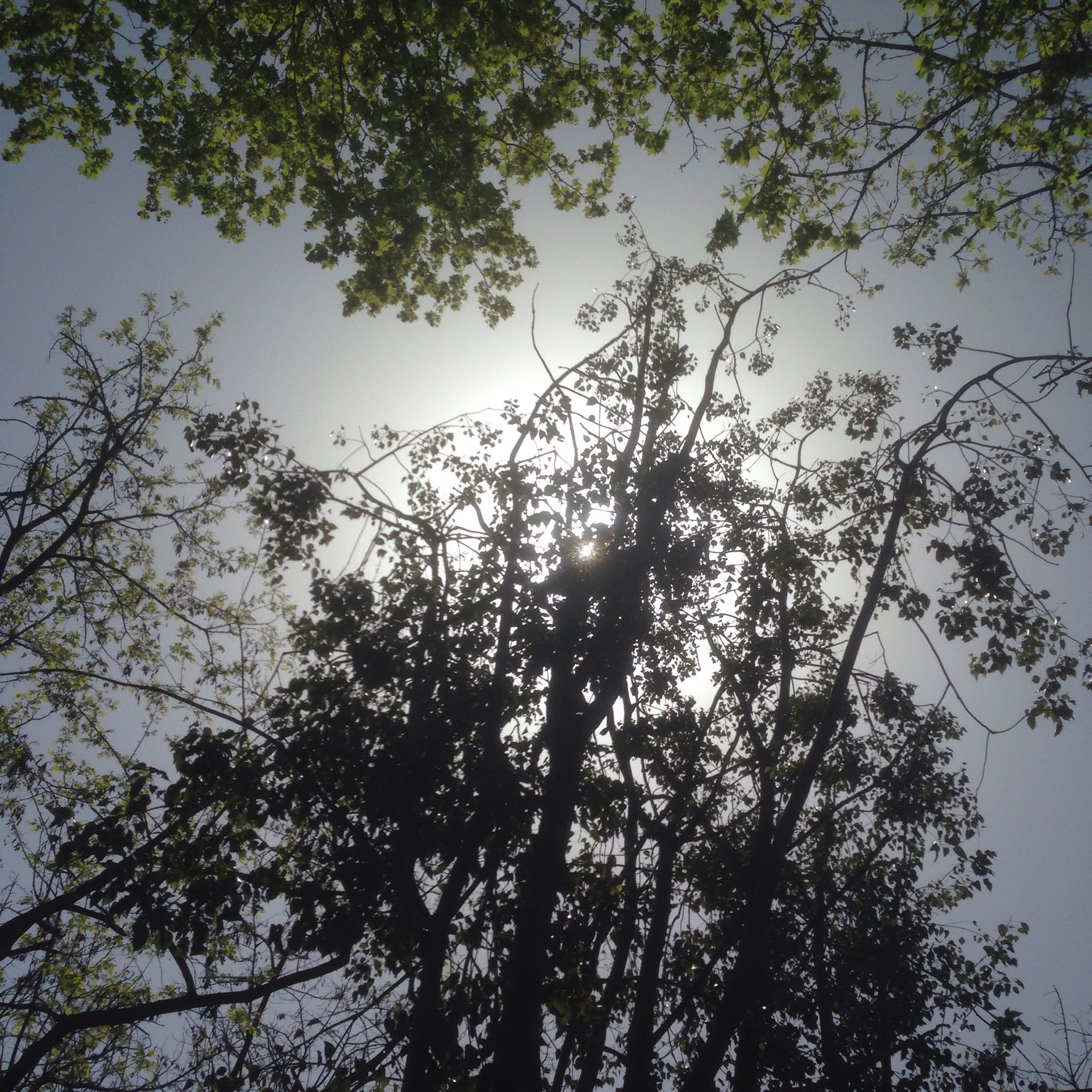 tree, low angle view, branch, growth, silhouette, tranquility, nature, sky, beauty in nature, clear sky, tree trunk, scenics, outdoors, no people, day, tranquil scene, sunlight, forest, leaf, high section