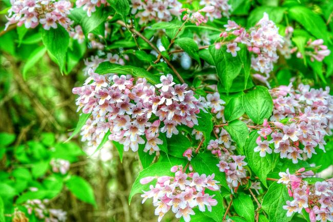 Plants And Garden Nature Photography Flowers, Nature And Beauty Garden_world Garden Flowers In Bloom Blossoming  Blossoming Tree Blossoming Fresh & Bright