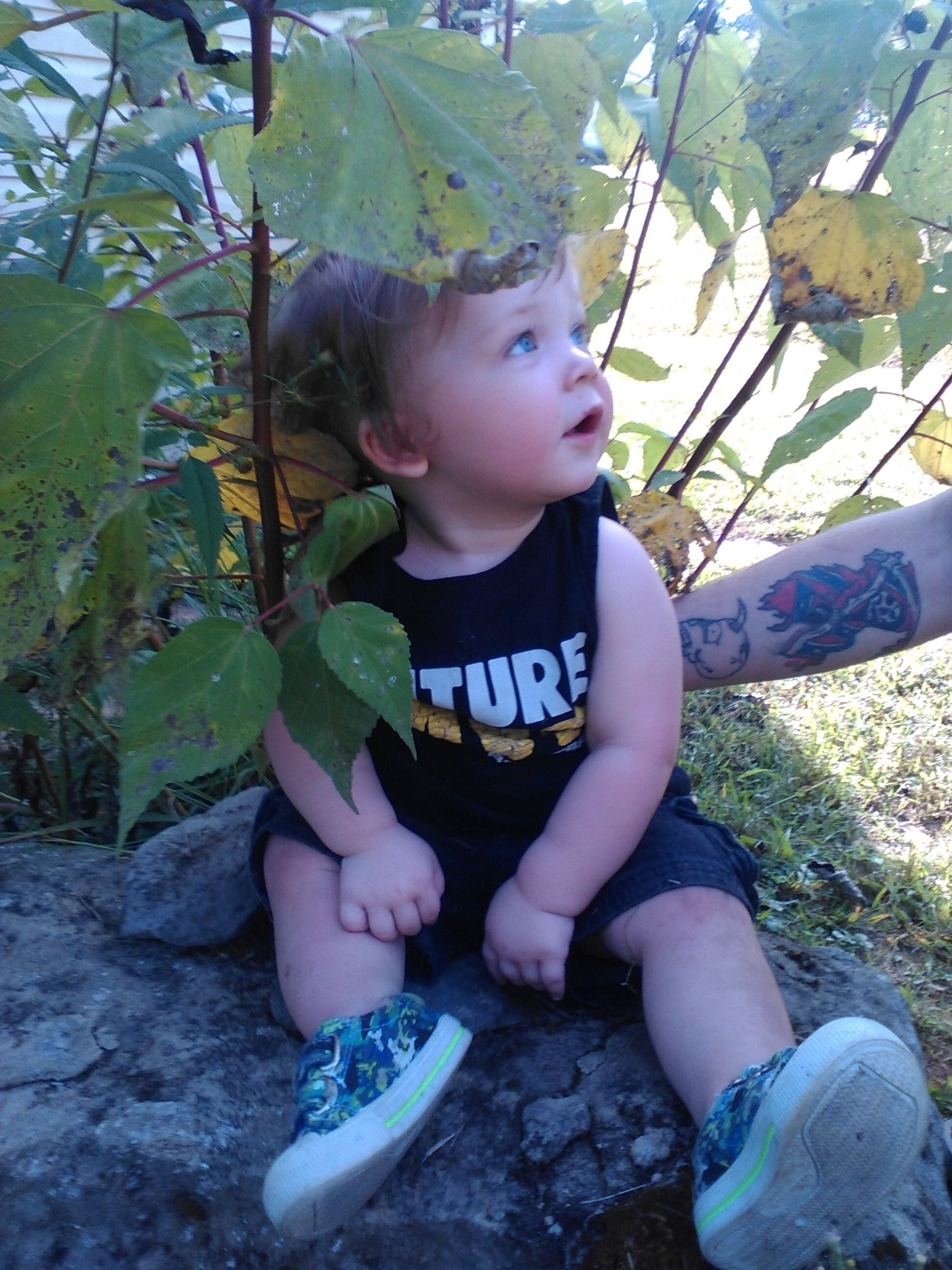 leaf, childhood, innocence, cute, elementary age, sitting, full length, casual clothing, person, day, toddler, growth, plant, outdoors, leaves, green color