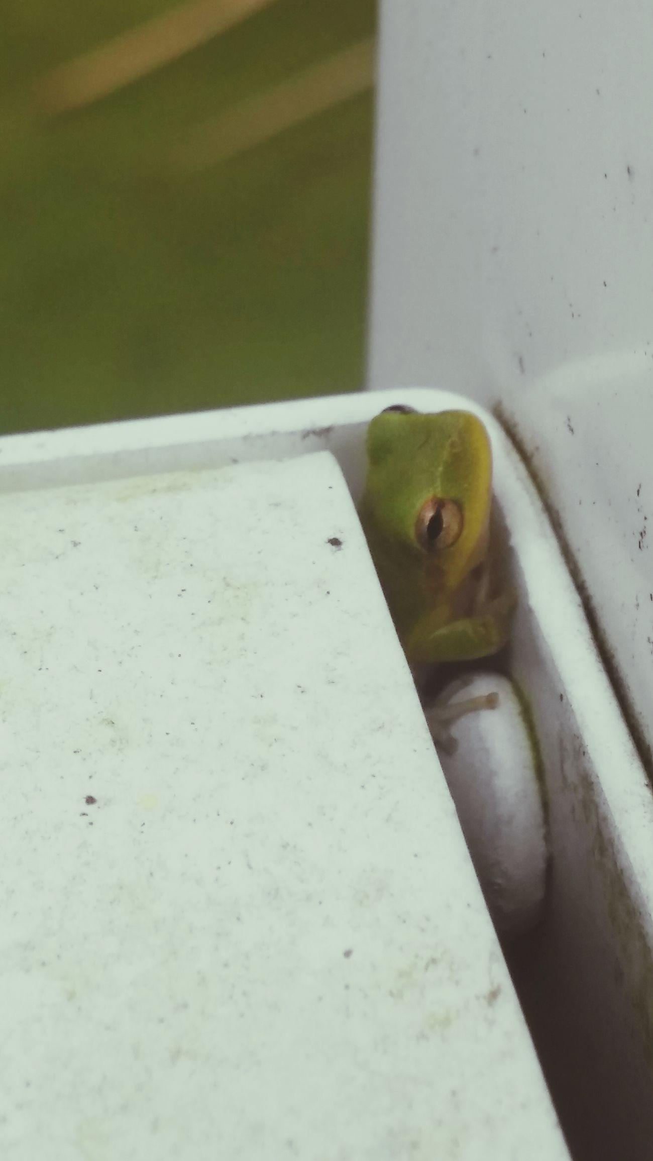 Lifeofafrog