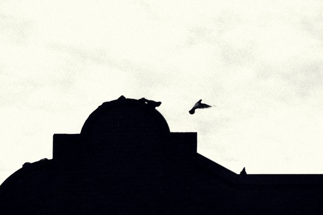 Observing a flock of birds as they come and go. Animal Themes Architecture Bird Bird In Flight Black & White Black And White Black And White Photography Blackandwhite Photography Doves Flight Goodbye Lonely Lonelyplanet Low Angle View One Animal Outdoors Perching Pigeon Pigeon In Flight Pigeons Pigeonslife Silhouette Sky