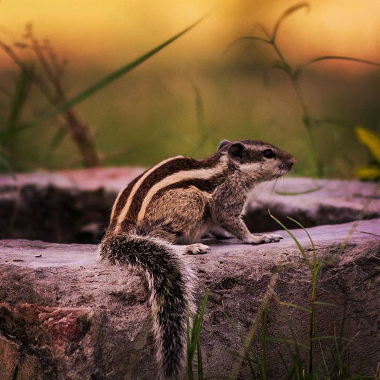 Animals Animal Squirrel TagFire Photooftheday Cute Instagood Animales Cute Love Nature Animallovers TFers Vish_shenanigans Justgoshoot Livefolk Shoottokill Huntgram Inspiroindia India_gram Soi Liveauthentic VSCO Vscoindia Vscofeed nationalgeographic nationalgeographic_ animalplanet nikonlover nikon