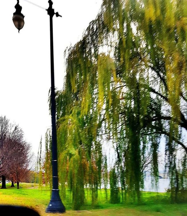 Naturephotography Naturelover Nature Landscape Landscapephotography Treelovers Tree Branches Lightpost Streetphotography Street Path Samsung Camera360 Sidewalk Picoftheday Igmasters Hiddentalent Lakeview Aneyeforaphoto Landscape DC Blur