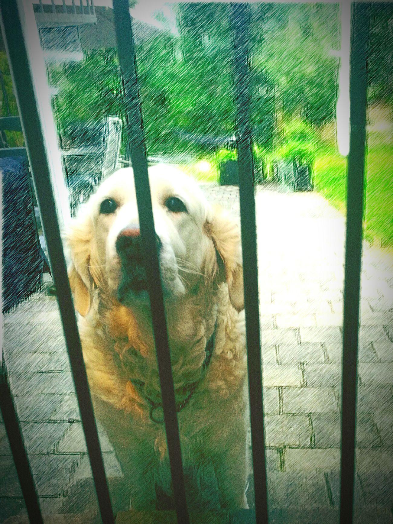 Behind bars! 😊