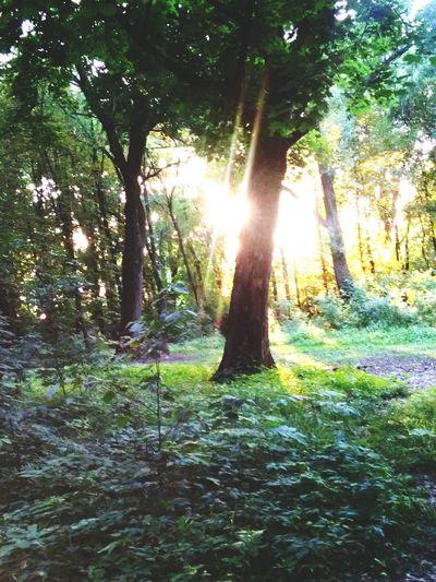 Wood Park Nature