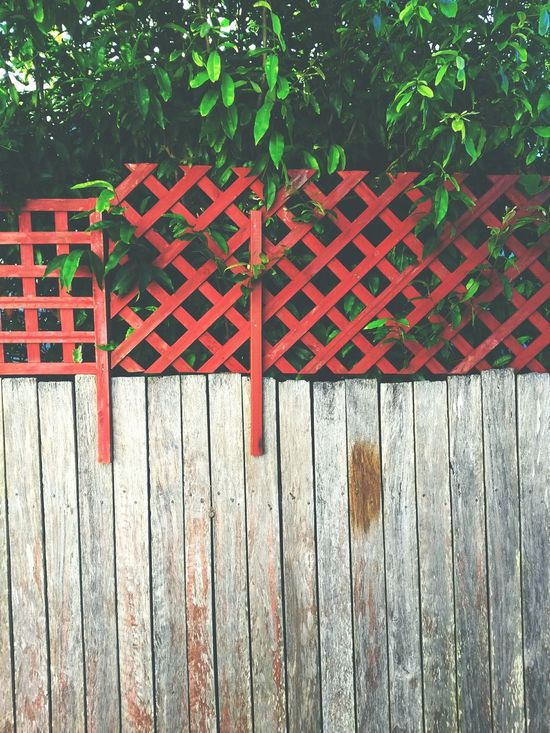 Quick shot before leaving home for the weekend Fences Red Hedge Photography PhonePhotography Quicksnap Designing