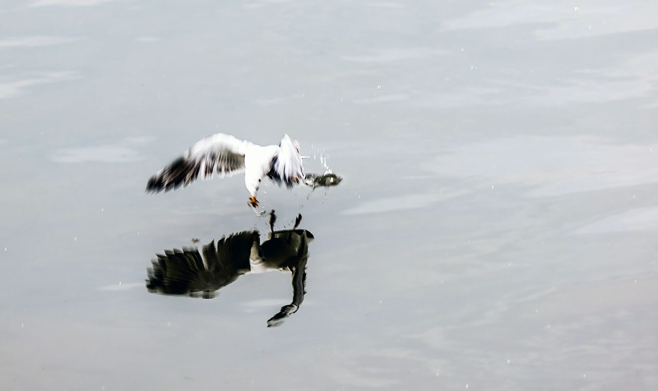 Beautiful stock photos of jagd, Animal Themes, Animal Wildlife, Animals In The Wild, Bird