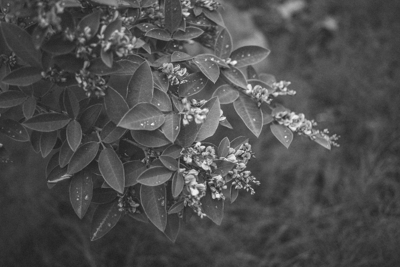Having fun without colors Beauty In Nature Blackandwhite Blooming Branch Bw Close-up Day Delicatessen Drop Flower Flower Head Focus On Foreground Fragility Freshness Garden Growth Leaf Nature Nature No People Outdoors Petal Plant Tree Water