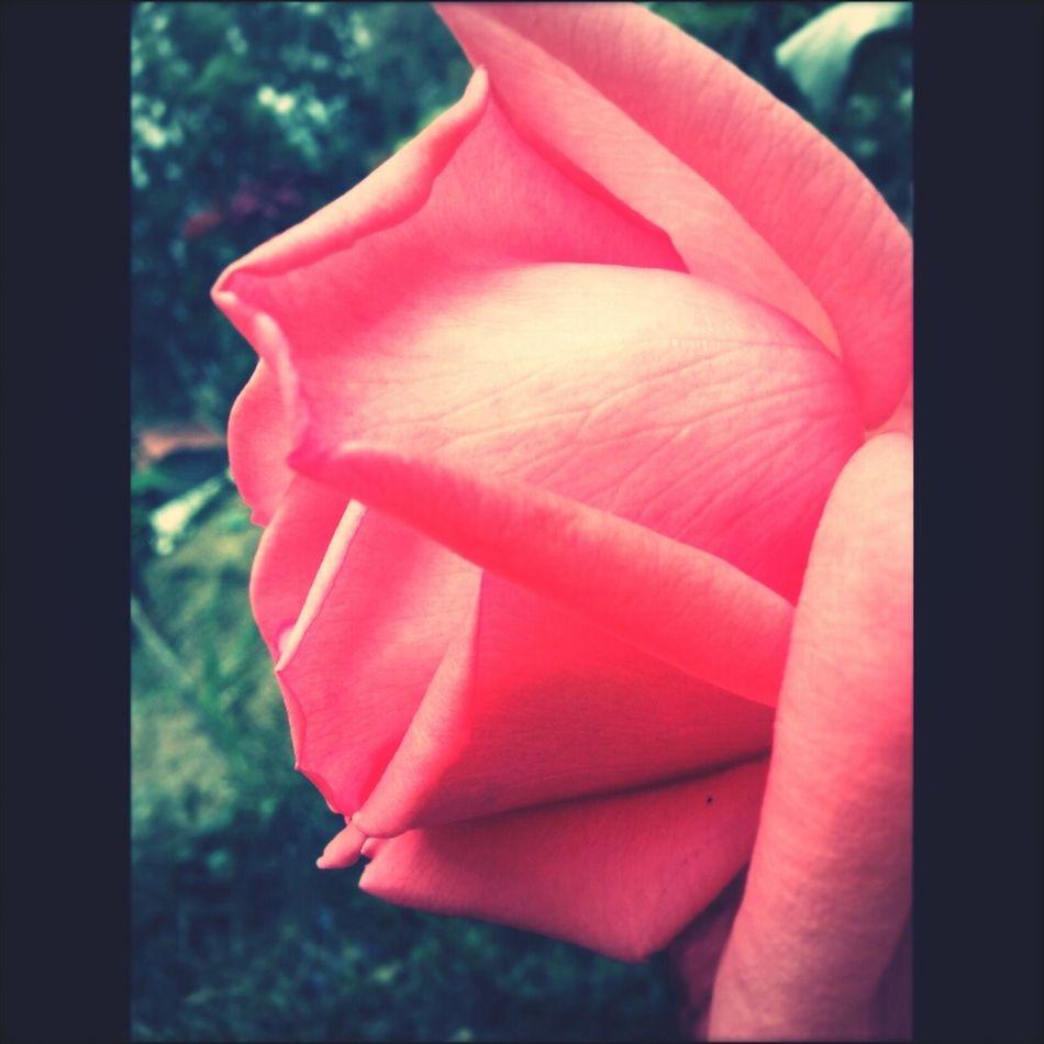 taken ny myself Flowers