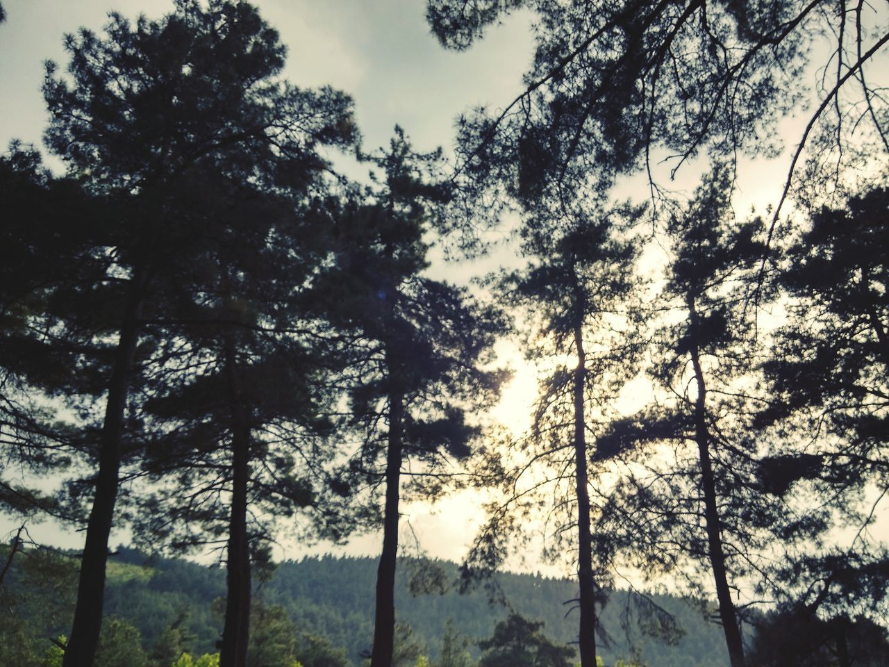 tree, nature, forest, low angle view, growth, no people, beauty in nature, sky, outdoors, day, tranquility, scenics
