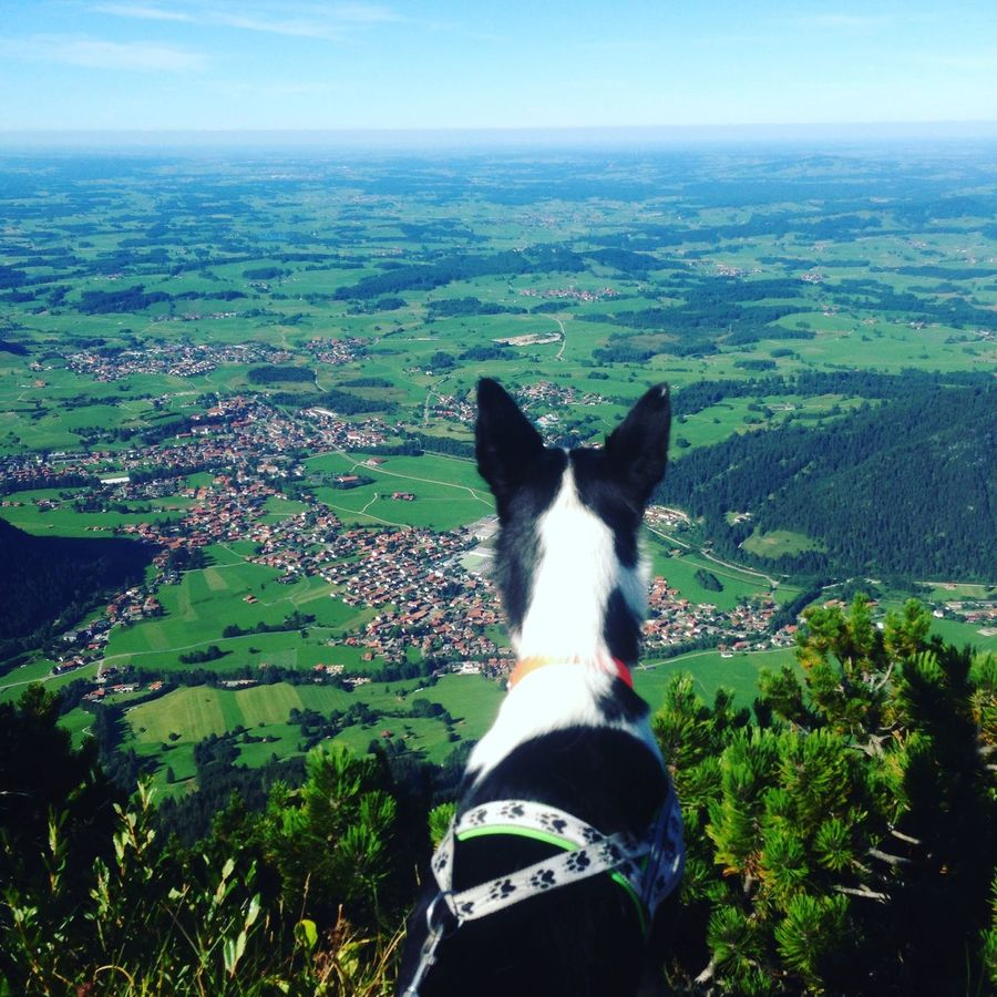 Adventure Alaskan Ausblick Bavaria Bayern Beauty In Nature Dog Freedom Freiheit Hund Husky Landscape Nature One Animal Outdoors Scenics Sky View