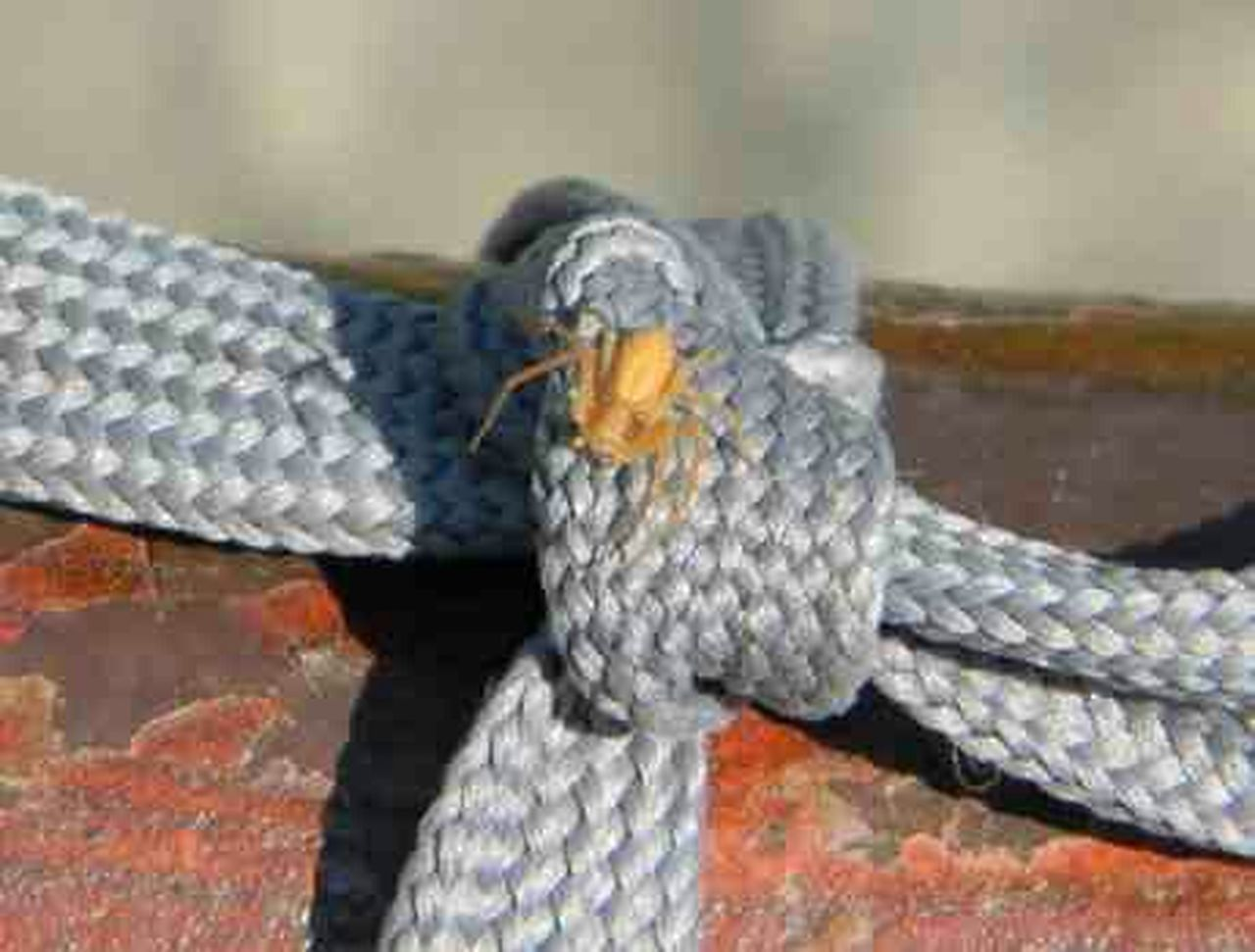 Spider Rope Insect Photo Insect Photography Beautiful Nature Nature Spiders Itsy Bitsy Spider