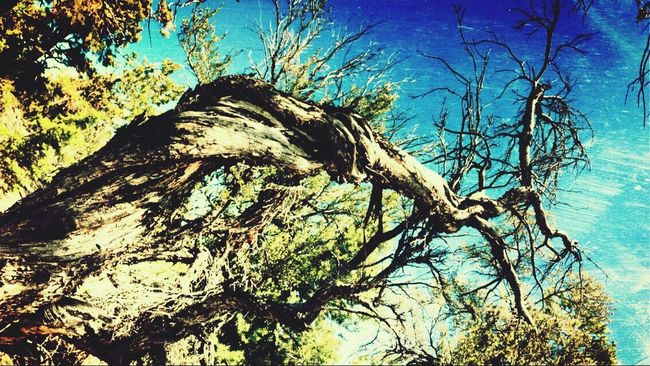 Twisted Branches / Mt. Charleston Eye4photography  EyeEm Best Edits ¡Eyeem Addict! Crooked Beauty