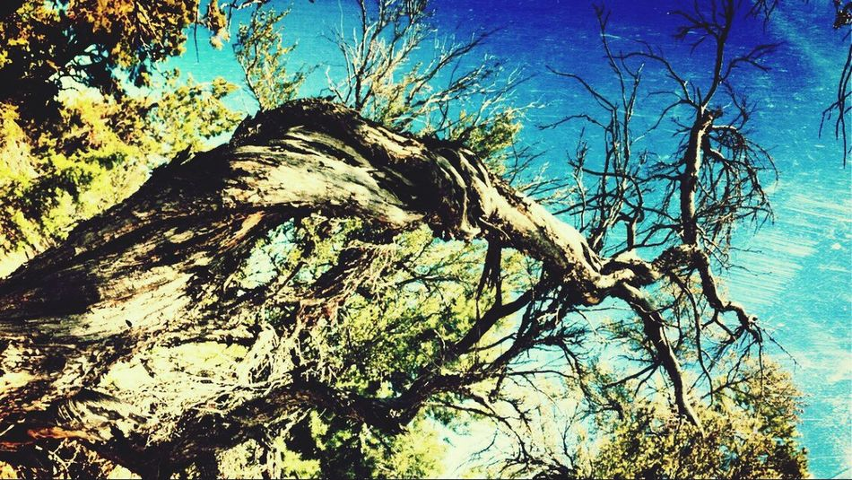 Twisted Branches / Mt. Charleston Eye4photography  EyeEm Best Edits ¡Eyeem Addict! Crooked Beauty