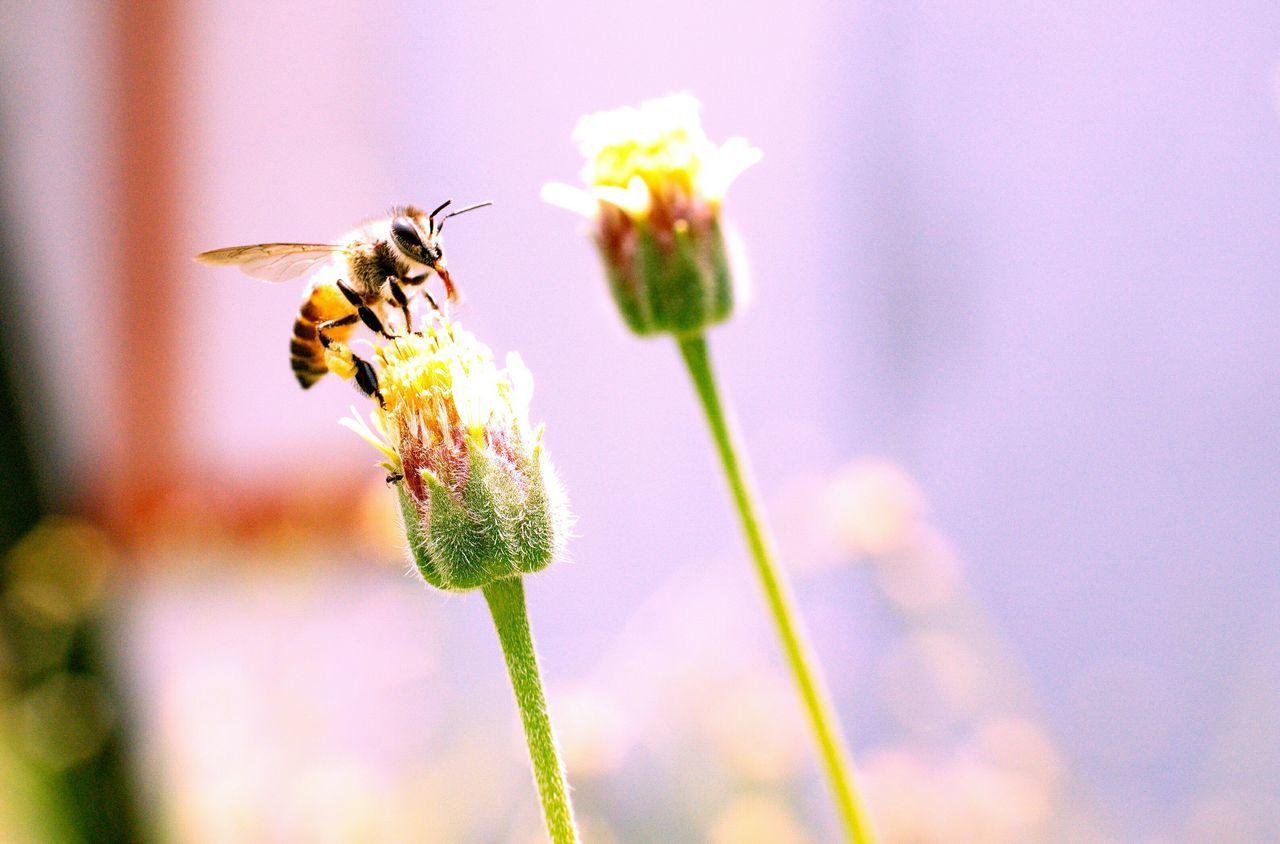 Beautiful stock photos of bee, Animal Themes, Animal Wildlife, Animals In The Wild, Beginnings