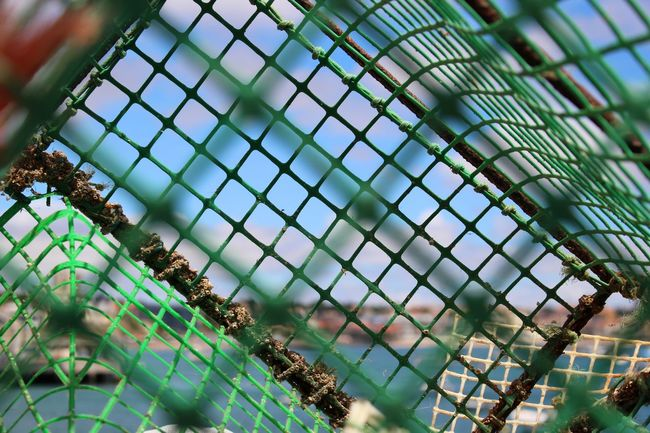 Backgrounds Blue Blue Sky Cage Close-up Cloudy Colour Of Life Exceptional Photographs EyeEm Best Shots EyeEmBestPics Fishing Tools Focus On Foreground From My Point Of View Full Frame Green Metal Metallic Outdoors Personal Perspective Perspective Pivotal Ideas Selective Focus Sky Water What's On The Roll