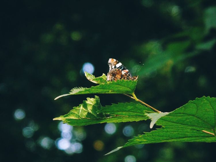 Insect Animals In The Wild Animal Themes One Animal Leaf Butterfly Animal Photography Green Color Animal Wildlife Focus On Foreground Nature Outdoors Day No People Close-up Plant Growth Damselfly Beauty In Nature Perching