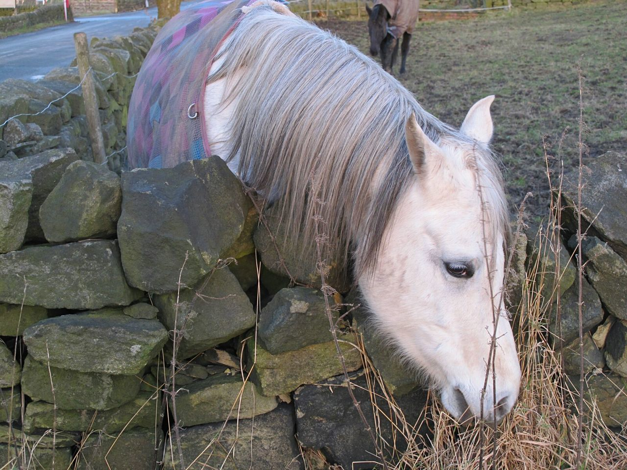 Animal Themes Mammal Domestic Animals One Animal Livestock No People Outdoors Day Nature Horses_of_instagram EyeEmbestshots. Eyeemphotography Tranquil Scene Outdoors Valleyside Winter Cold Temperature Fine Art Photograhy Horse Field Landscape Scenics Dusk Moorland Beauty In Nature Grass