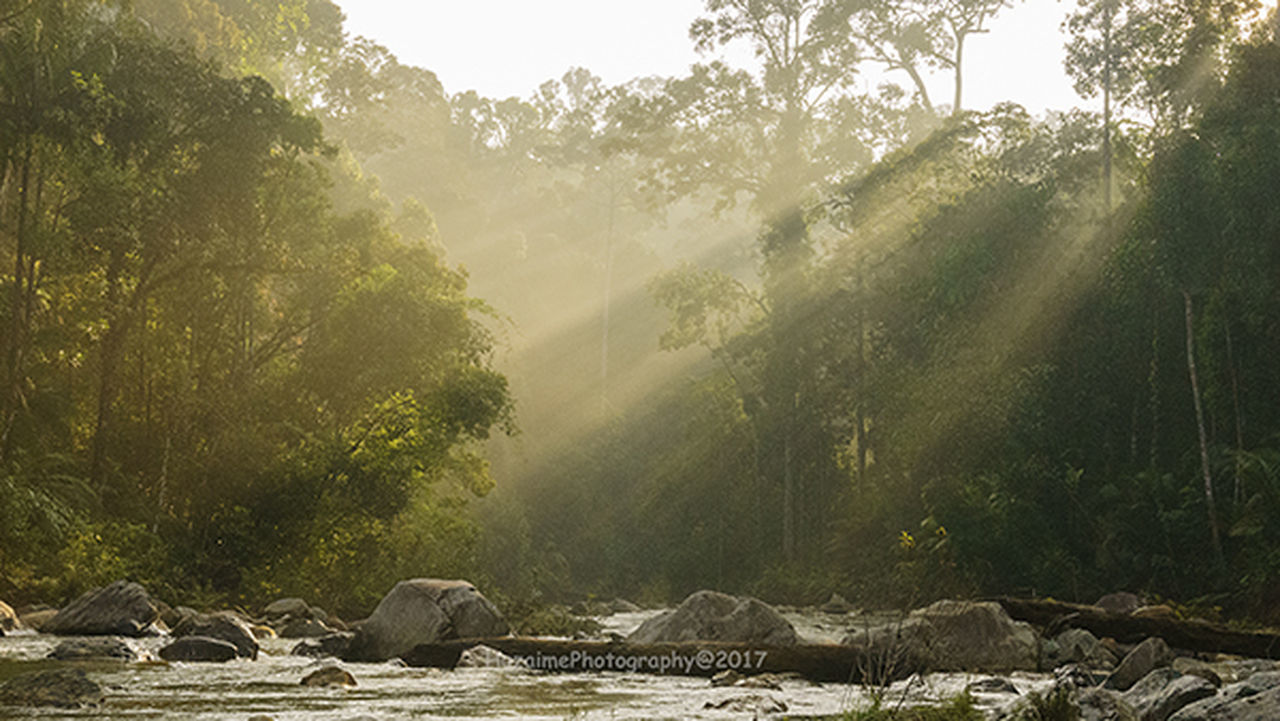 ray of light at johor national parks selai, Animals In The Wild Beauty In Nature Day Endau Rompin Rainfores Forest Johor National Park Mountain Nacture_photography Nature Outdoors Ray Of Light Sunlight Takah Tinggi Waterfall Taman Negara Johor Selai Tree Water