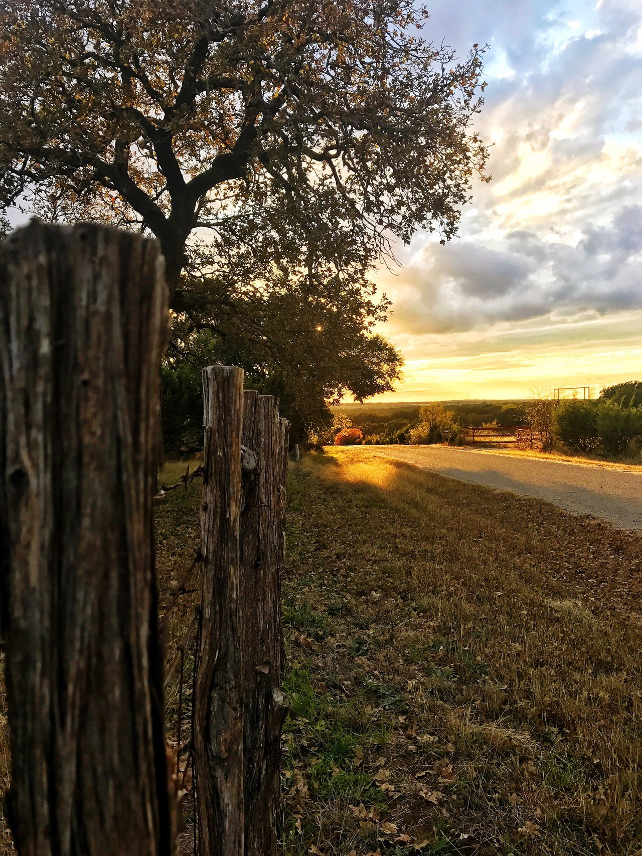 Sunrise Tree Wood - Material Sky Nature Outdoors Landscape Tranquility No People Grass Cloud - Sky Beauty In Nature Growth Sunset Day Country Texas Backroads