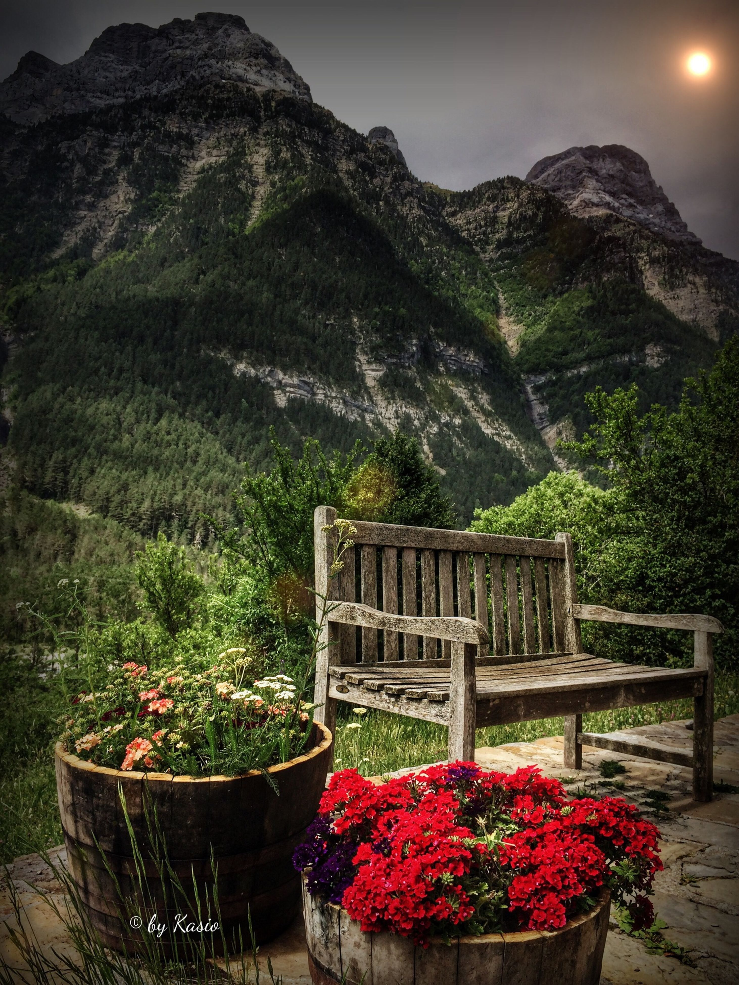 flower, mountain, plant, growth, freshness, beauty in nature, nature, fragility, mountain range, red, tranquil scene, tranquility, potted plant, scenics, tree, outdoors, day, blooming, in bloom, built structure