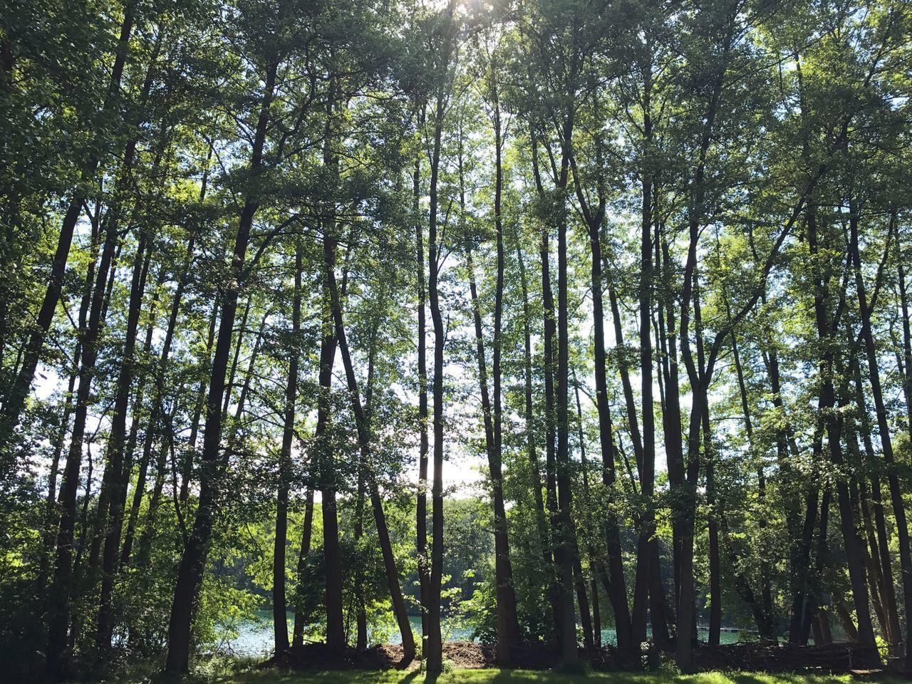 Nature Landscape Lake Tree Trees Green Forest Liepnitzsee Berlin
