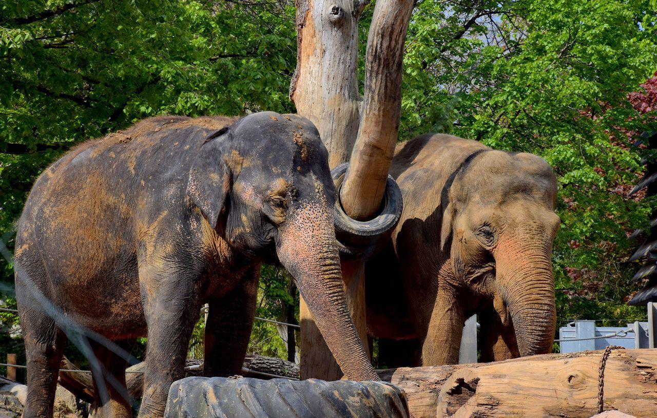 Elephant Tree Animals In The Wild Animal Wildlife Animal Trunk Animal Themes No People Outdoors Day Mammal Tree Trunk African Elephant Nature Tusk Elephant Calf Safari Animals