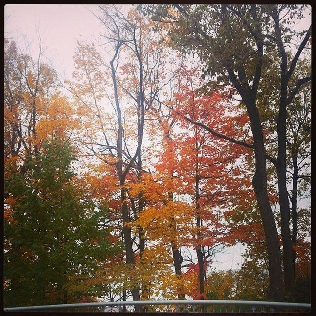 Autumnday PrettyLeaves Prettycolours Fallcolours Trees