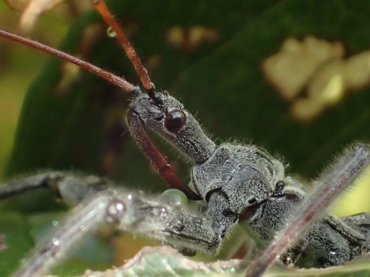 Wheel Bug Assassin Bug One Animal Animals In The Wild Animal Themes Animal Wildlife No People Close-up Nature Day Outdoors