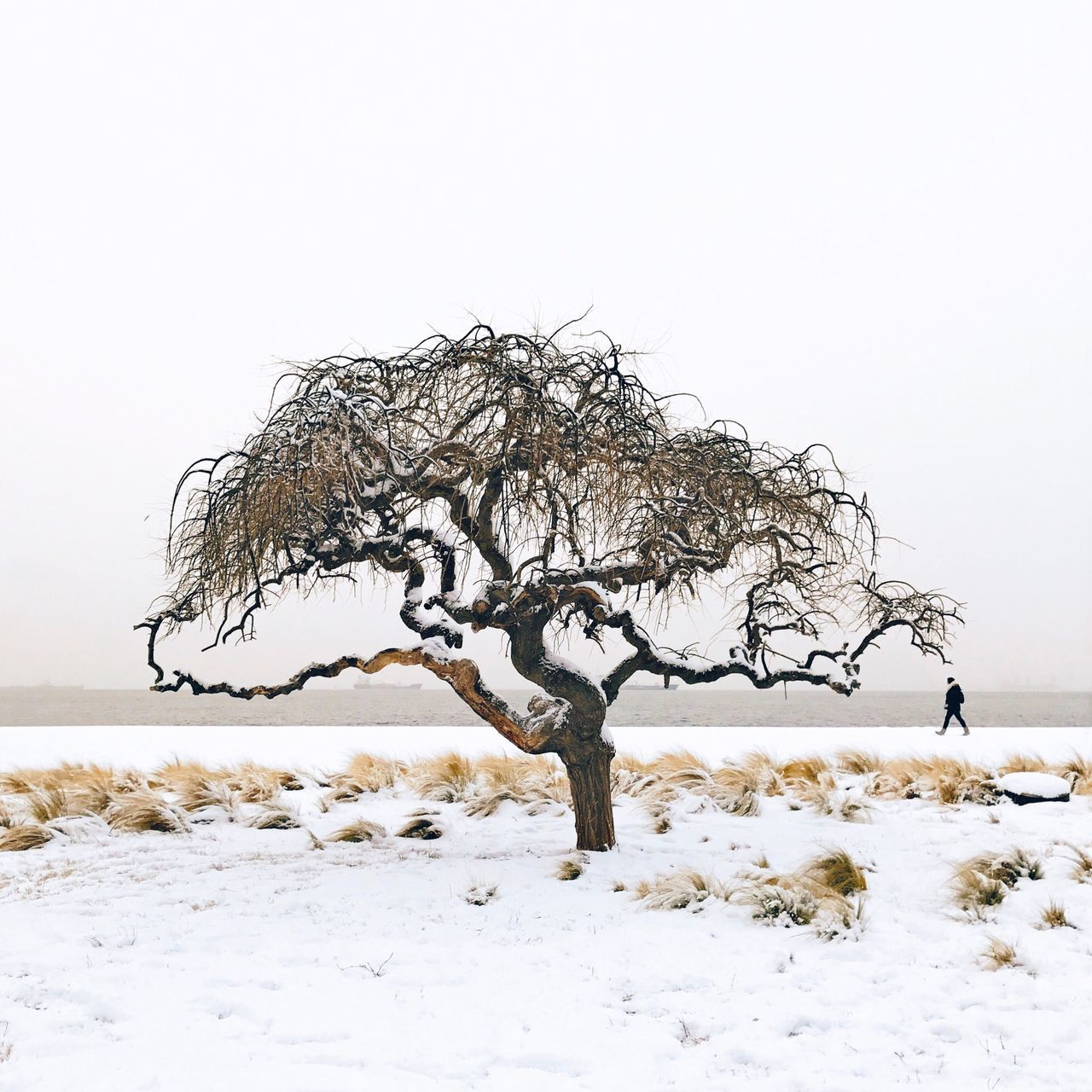 The tree that everyone shot but not with snow Solotree Weather Cold Temperature Beauty In Nature Frozen Snow Fresh On Market 2017