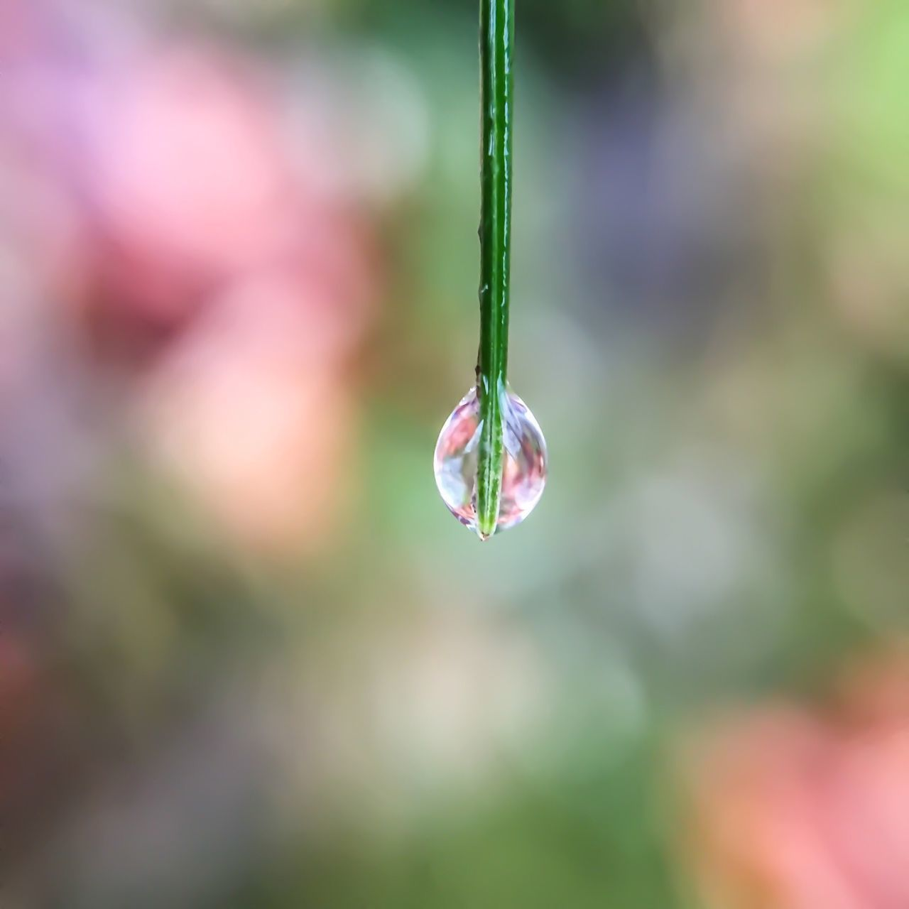 Water Drop On Blade Of Grass